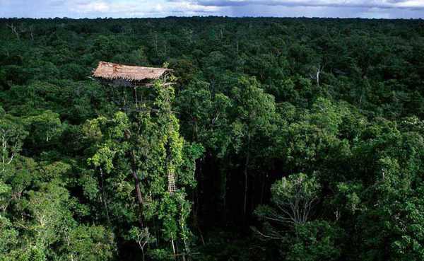 Los Korowai: una increíble tribu de 'ingenieros', que construye edificios en los árboles - 1