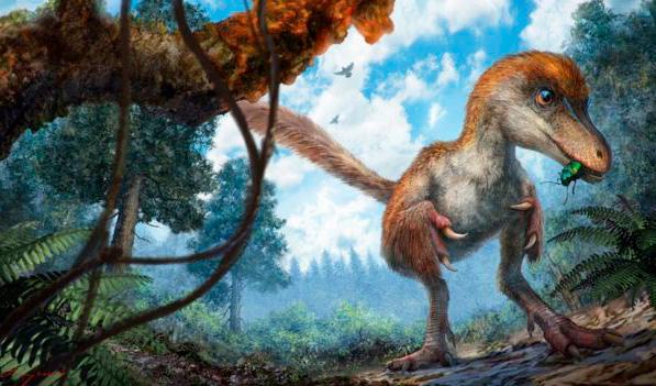 Hallan la primera cola de dinosaurio, perfectamente conservada en ámbar y con plumas - 1