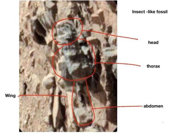 01.12.N1.Insectos1
