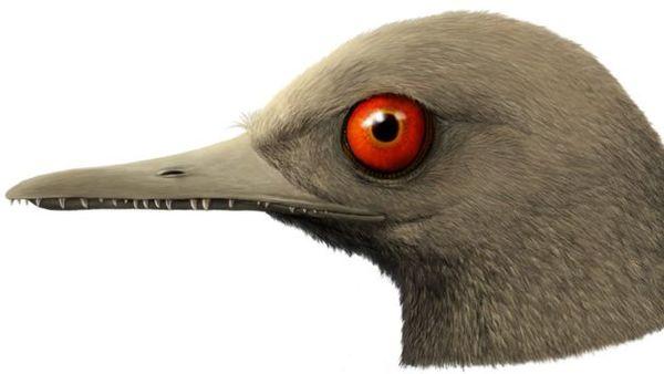 2303.H.N1.Dino3