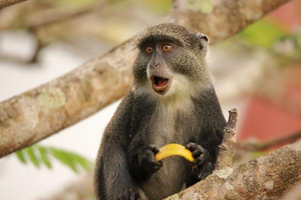 3007.H.N2.Primates