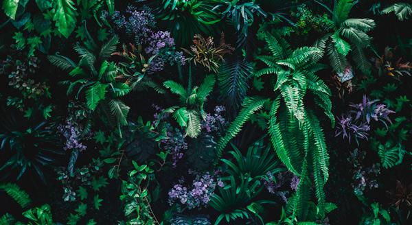Flores y vegetación de la selva, Amazonia.