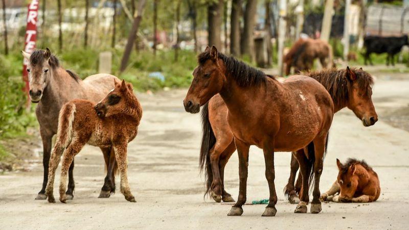 Los animales se adueñan de la ciudad durante el confinamiento - 4