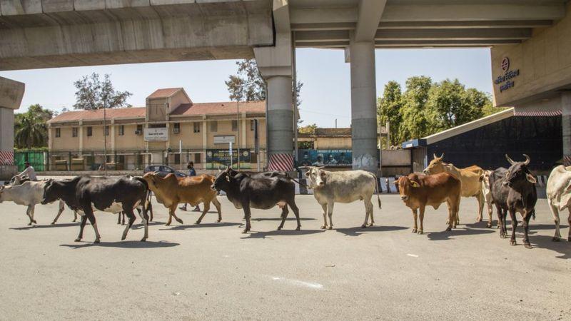 Los animales se adueñan de la ciudad durante el confinamiento - 2