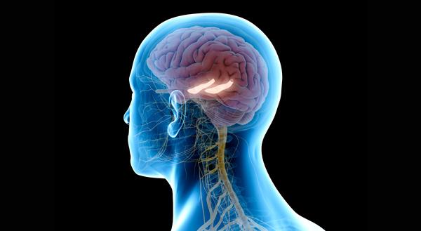 Render 3D señalizando el hipocampo en la cabeza de un humano.