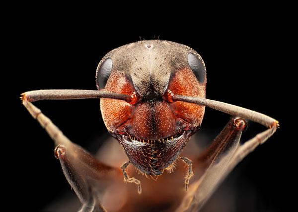 La colonia de hormigas más grande del mundo vive en Argentina - 2