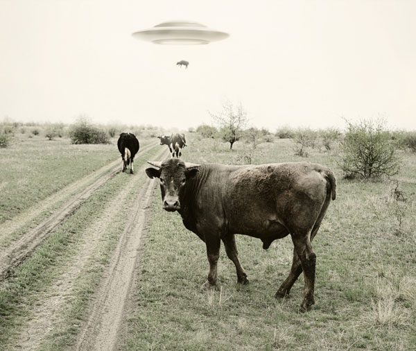 Imagen surrealista de un ovni abduciendo una vaca