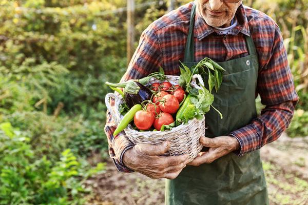 Cultivo de Verduras,