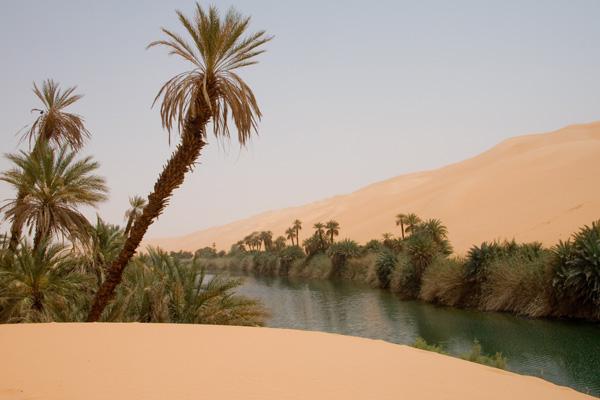 Megasequia Sahara