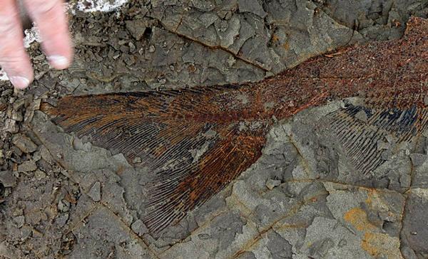 Dinosaurio zombi: hallan parásitos fosilizados en los huesos de un titanosaurio - 3