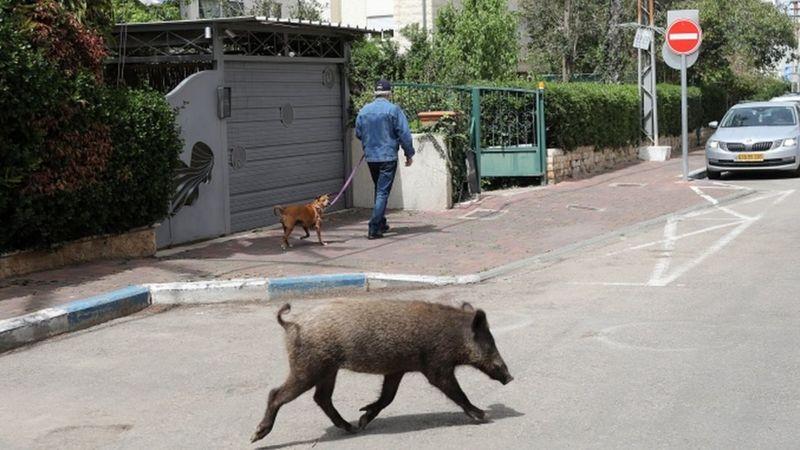 Los animales se adueñan de la ciudad durante el confinamiento - 5