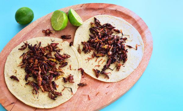 Platillo de insectos comestibles.