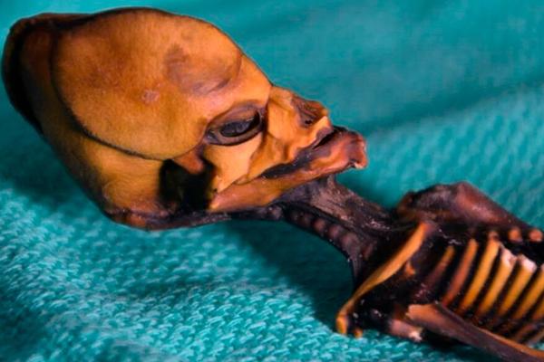 La increíble historia de la momia extraterrestre hallada en Chile - 2