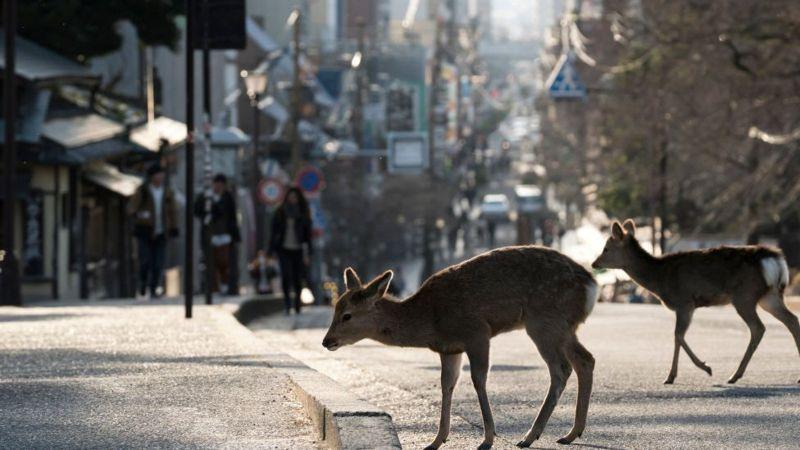 Los animales se adueñan de la ciudad durante el confinamiento - 1