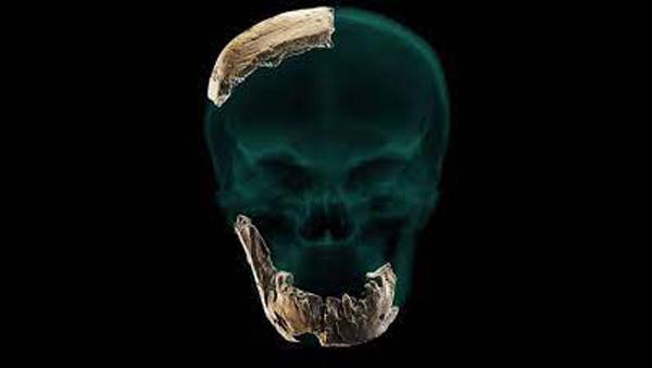 Reconstrucción virtual de la mandíbula del grupo de Homo de Nesher Ramla/Ariel Pokhojaev, Facultad de Medicina Sackler de la Universidad de Tel Aviv.