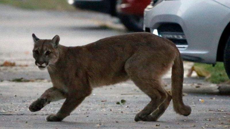 Los animales se adueñan de la ciudad durante el confinamiento - 9
