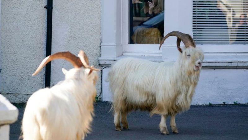 Los animales se adueñan de la ciudad durante el confinamiento - 6
