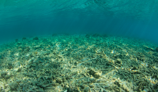 Fondo submarino con arrecife de coral muerto