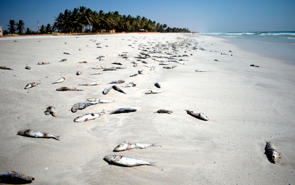 Peces arrastrados a la orilla por la falta de oxígeno