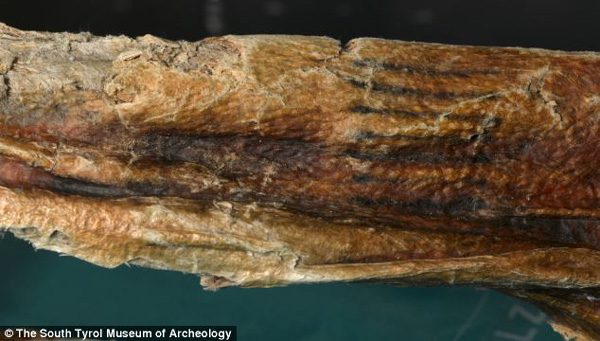 Tatuajes lineales de Ötzi, la momia más antigua de Europa